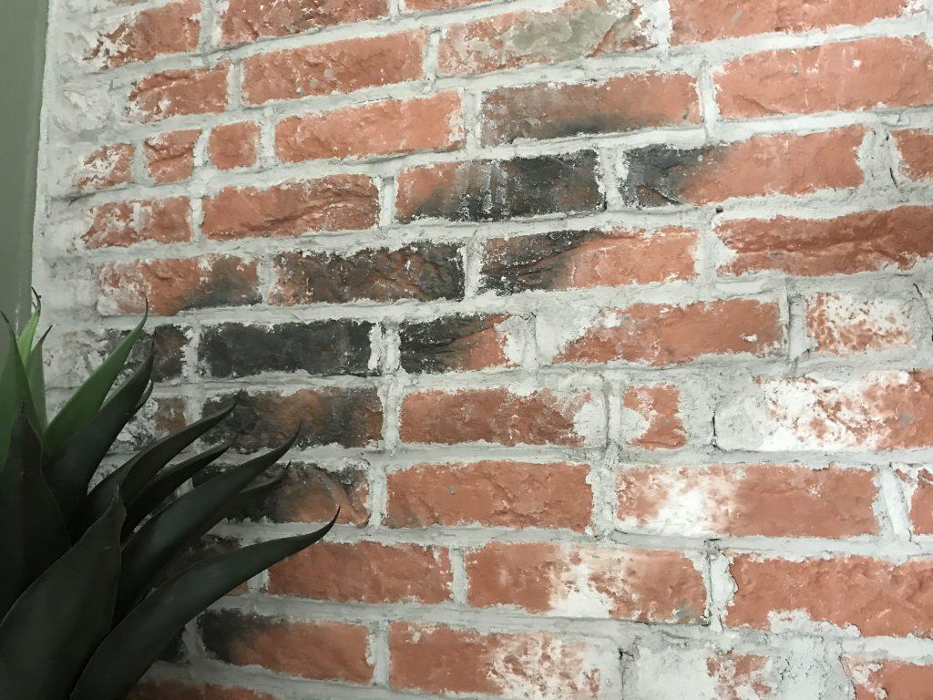 plant voor de stenen muur